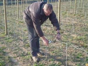 viticulture-bio1
