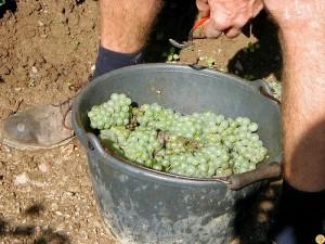 viticulture-bio13