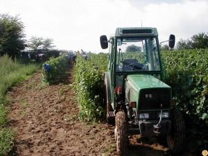 viticulture-bio14