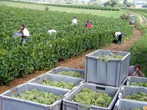 viticulture-bio15
