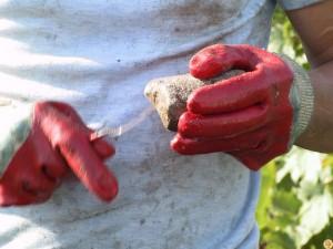 viticulture-bio3