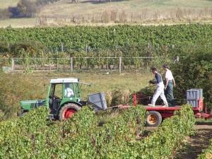 viticulture-bio9